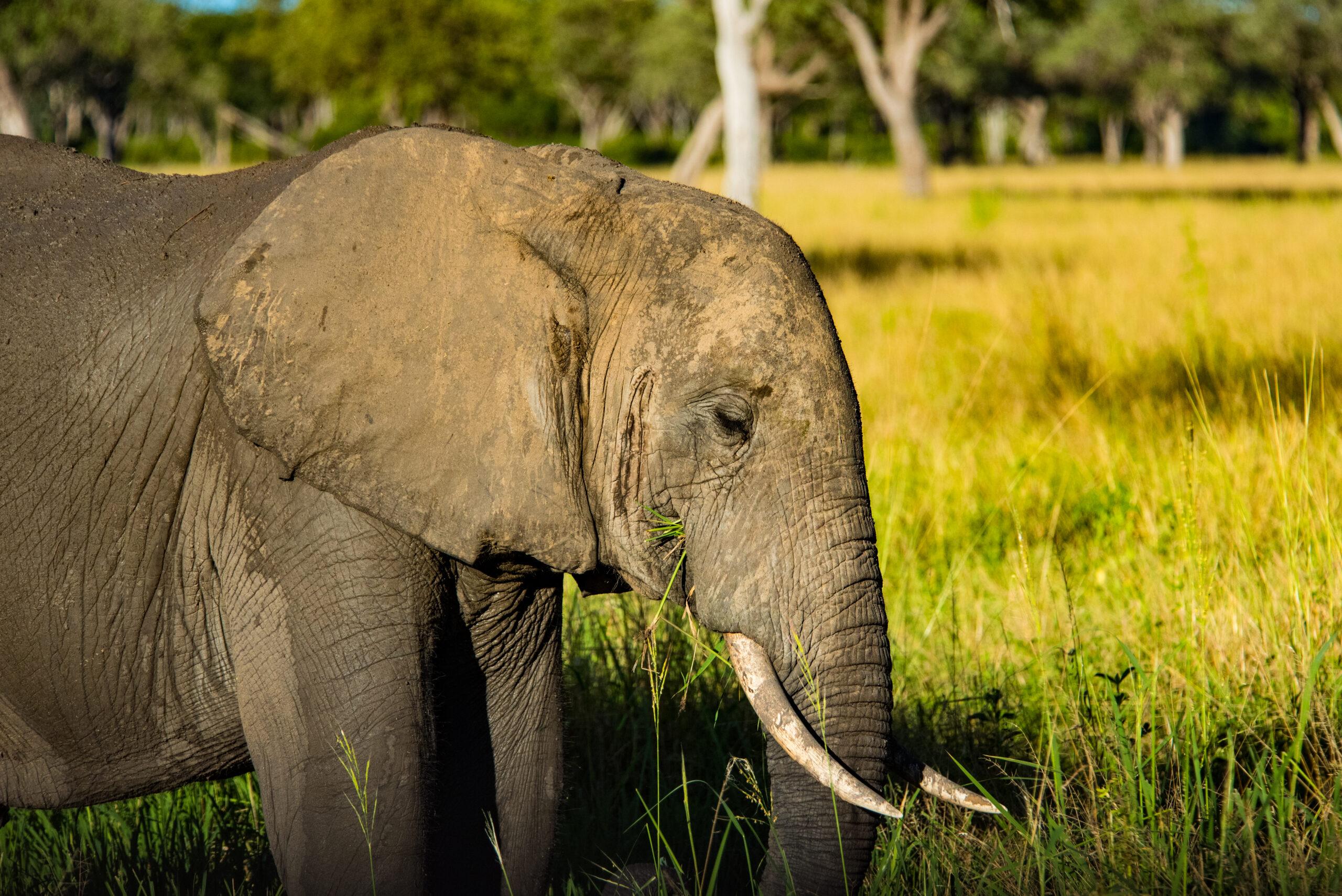 Elephant sighting safari