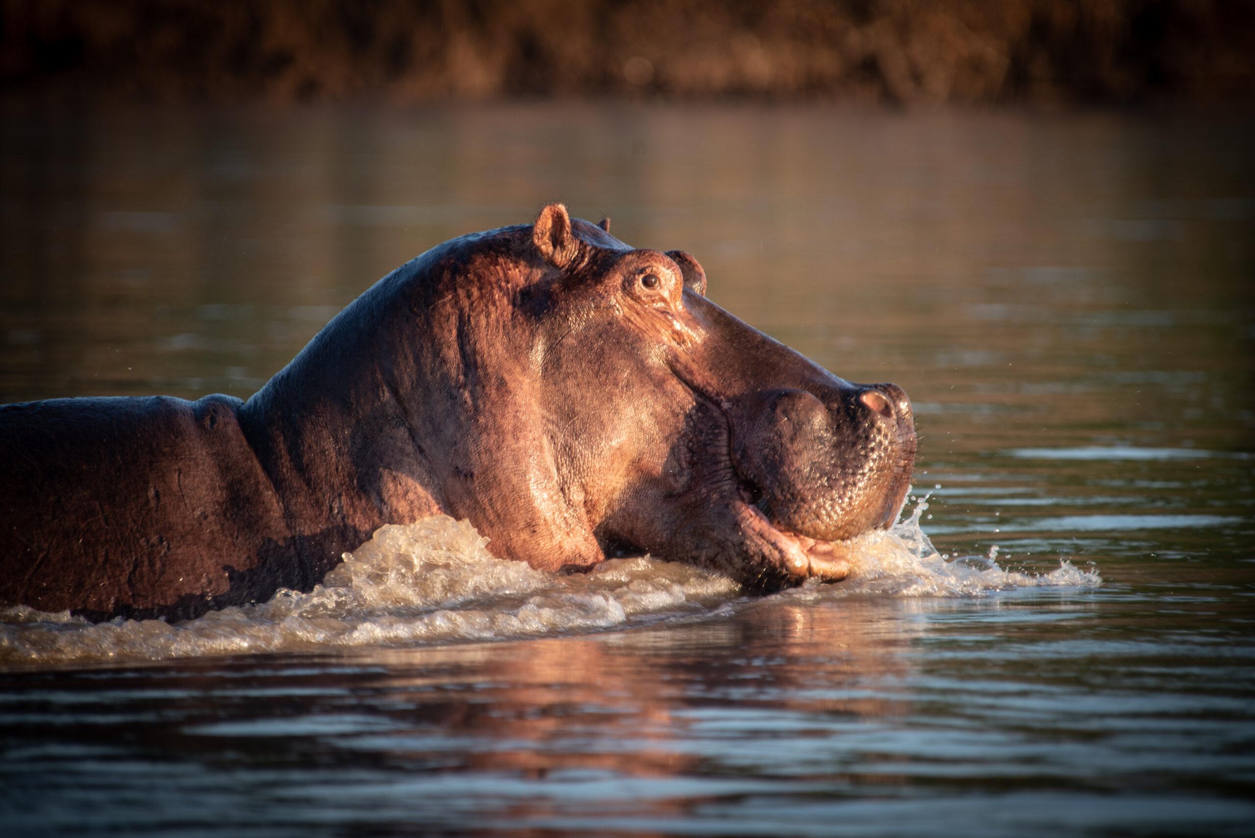 Wildlife in Botswana