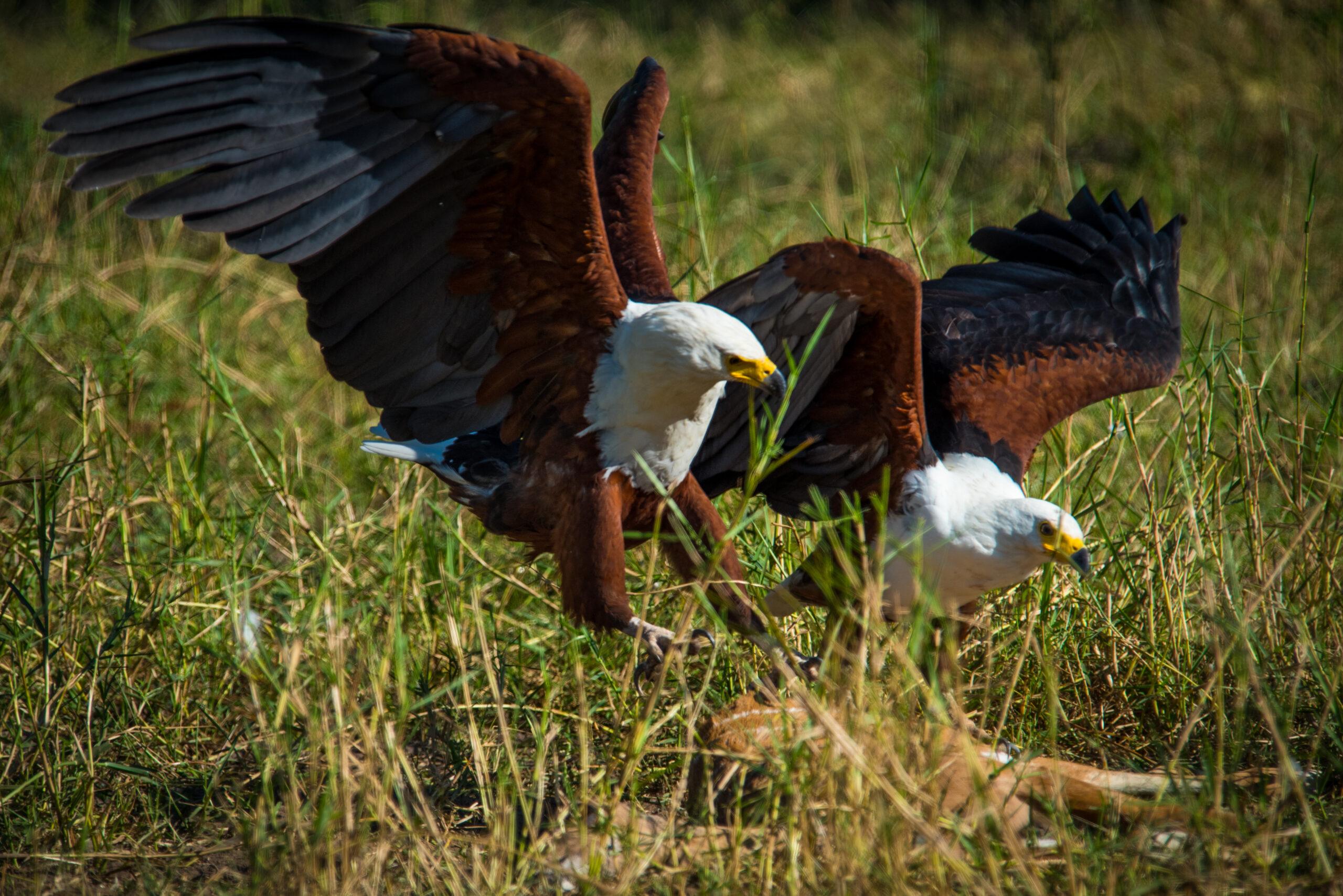 Bird viewing at Nokanyana