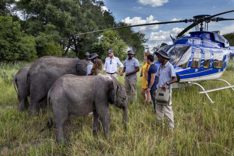 Elephant Heaven Roots & Journeys
