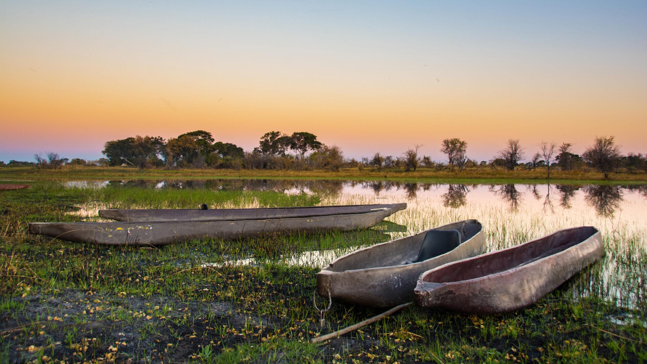 Mocorros of the Okavango Delta