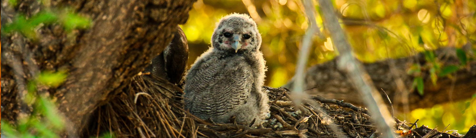 Bird spotting Botswana
