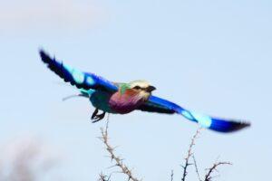 Excellent Birding